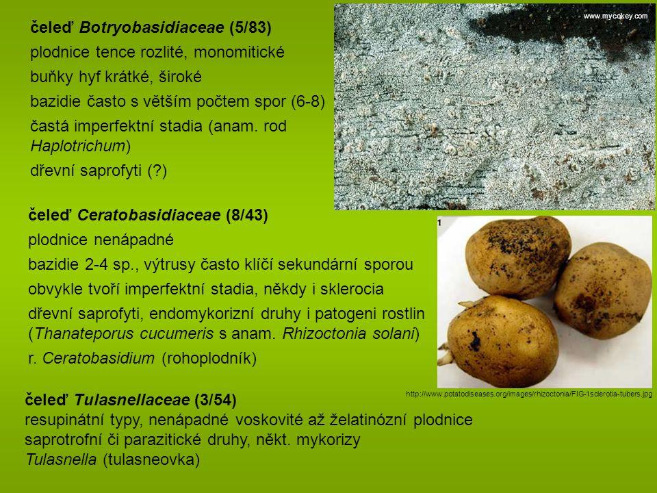 čeleď Botryobasidiaceae (5/83) plodnice tence rozlité, monomitické