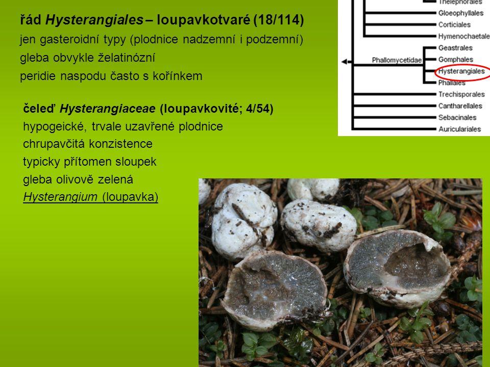 řád Hysterangiales – loupavkotvaré (18/114)