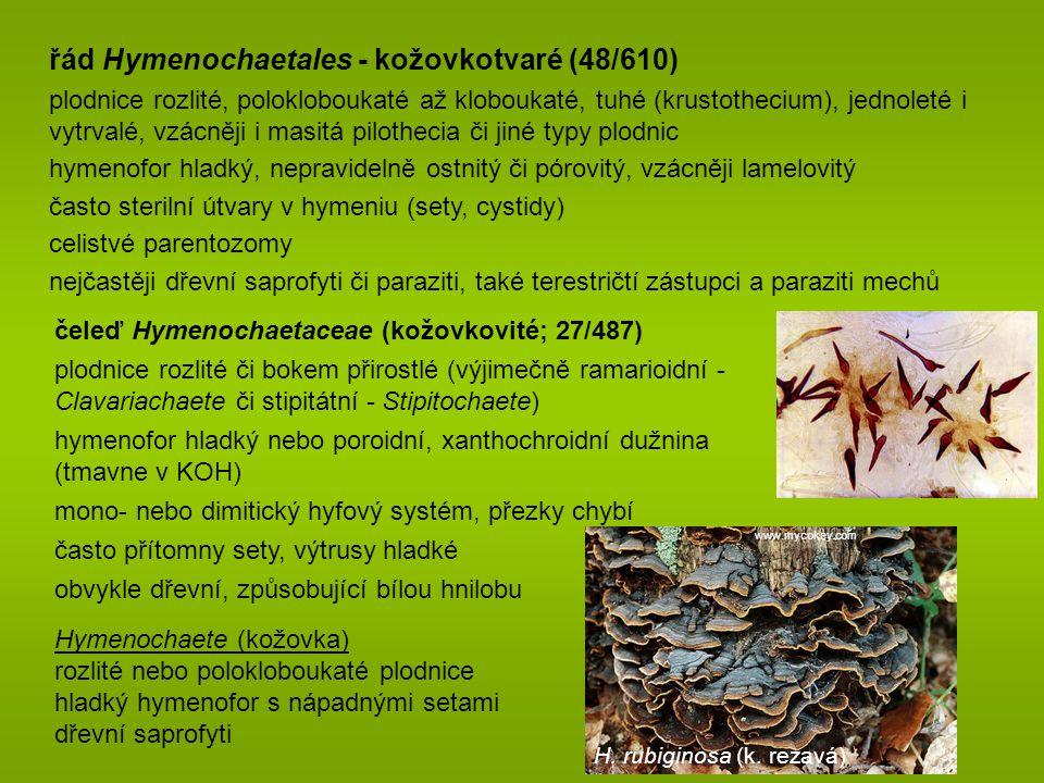 řád Hymenochaetales - kožovkotvaré (48/610)