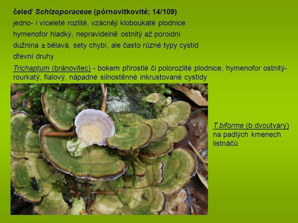 čeleď Schizoporaceae (pórnovitkovité; 14/109)