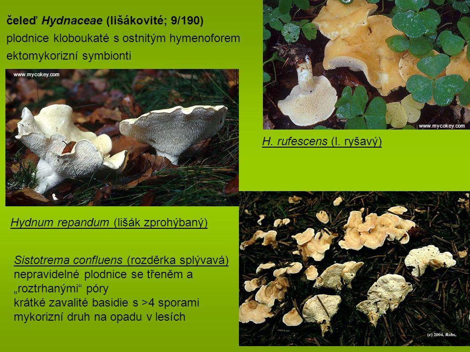 čeleď Hydnaceae (lišákovité; 9/190)