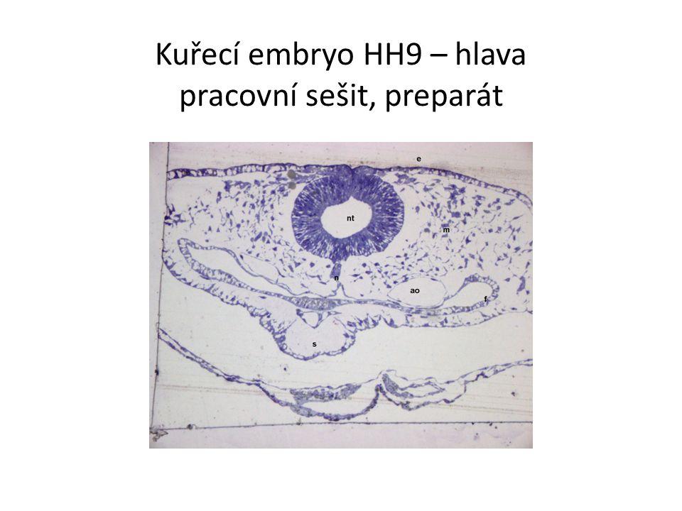 Kuřecí embryo HH9 – hlava pracovní sešit, preparát