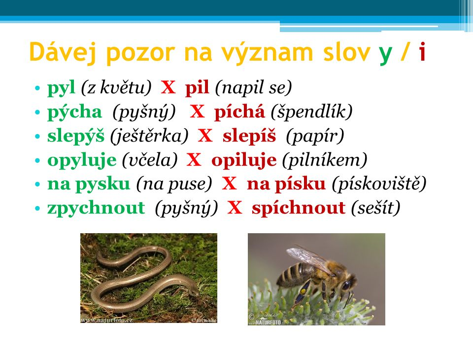 Dávej pozor na význam slov y / i