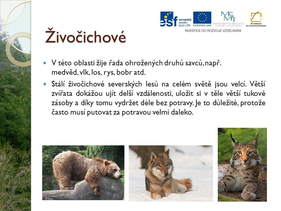 Živočichové V této oblasti žije řada ohrožených druhů savců, např. medvěd, vlk, los, rys, bobr atd.