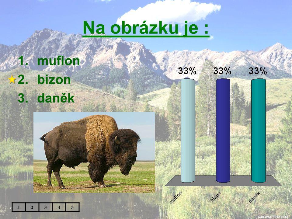 Na obrázku je : muflon bizon daněk 1 2 3 4 5