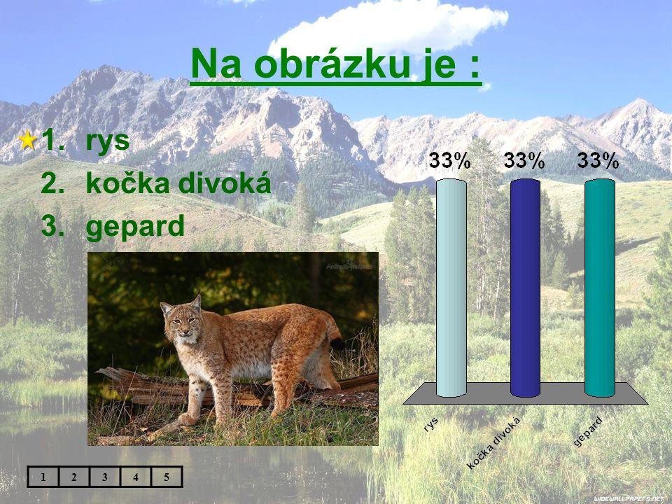 Na obrázku je : rys kočka divoká gepard 1 2 3 4 5