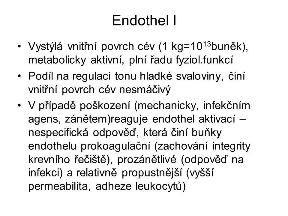 Endothel I Vystýlá vnitřní povrch cév (1 kg=1013buněk), metabolicky aktivní, plní řadu fyziol.funkcí.