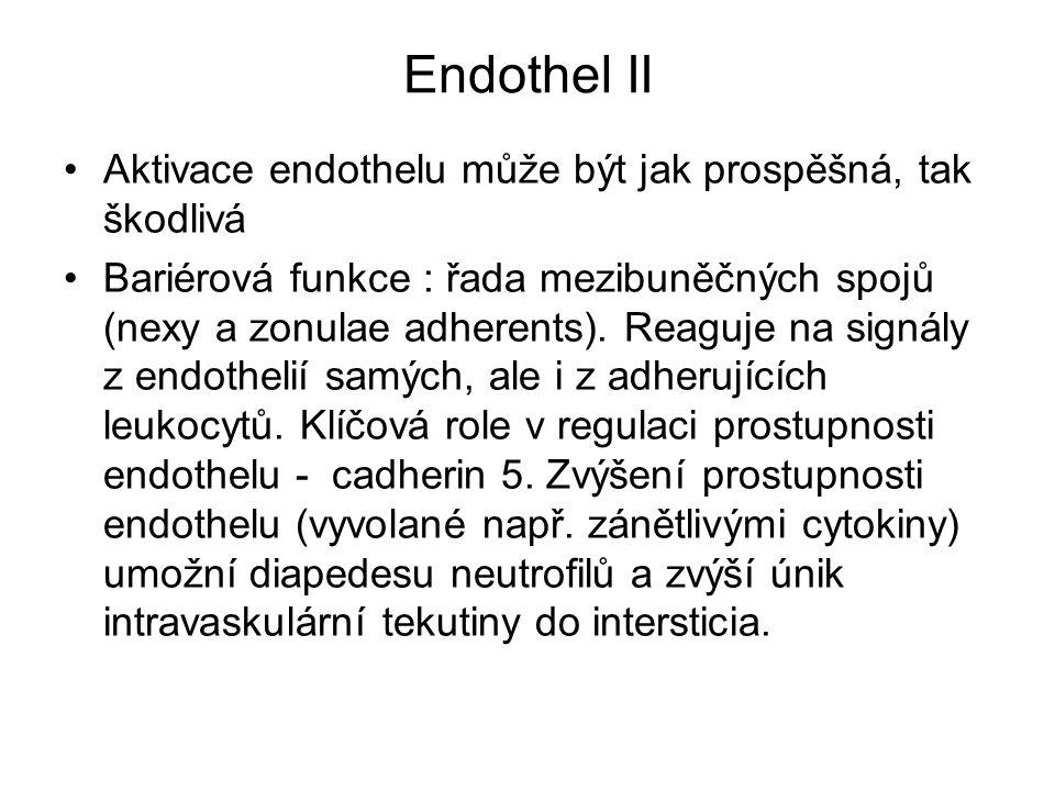 Endothel II Aktivace endothelu může být jak prospěšná, tak škodlivá