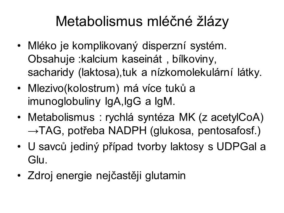 Metabolismus mléčné žlázy