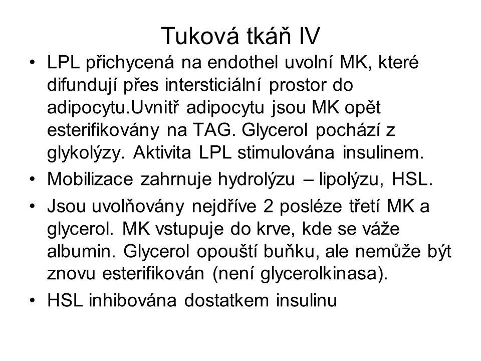 Tuková tkáň IV