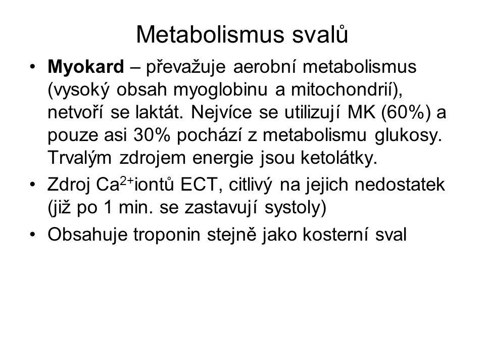 Metabolismus svalů