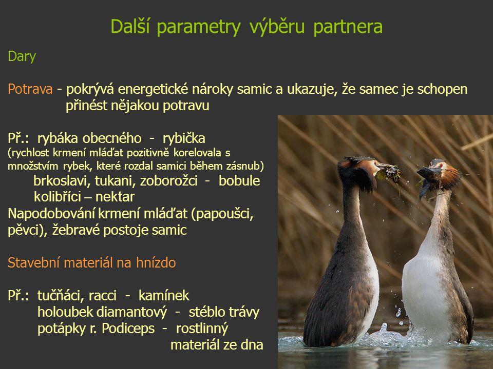 Další parametry výběru partnera