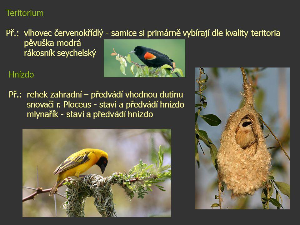 Teritorium Př.: vlhovec červenokřídlý - samice si primárně vybírají dle kvality teritoria. pěvuška modrá.