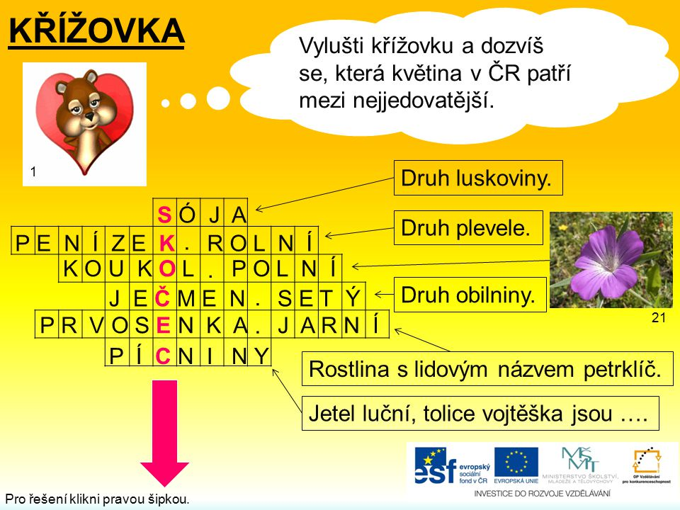 KŘÍŽOVKA Vylušti křížovku a dozvíš se, která květina v ČR patří mezi nejjedovatější. 1. Druh luskoviny.