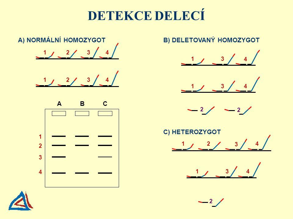 DETEKCE DELECÍ A) NORMÁLNÍ HOMOZYGOT B) DELETOVANÝ HOMOZYGOT A B C