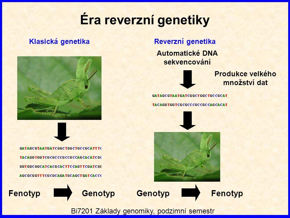 Produkce velkého množství dat Automatické DNA sekvencování