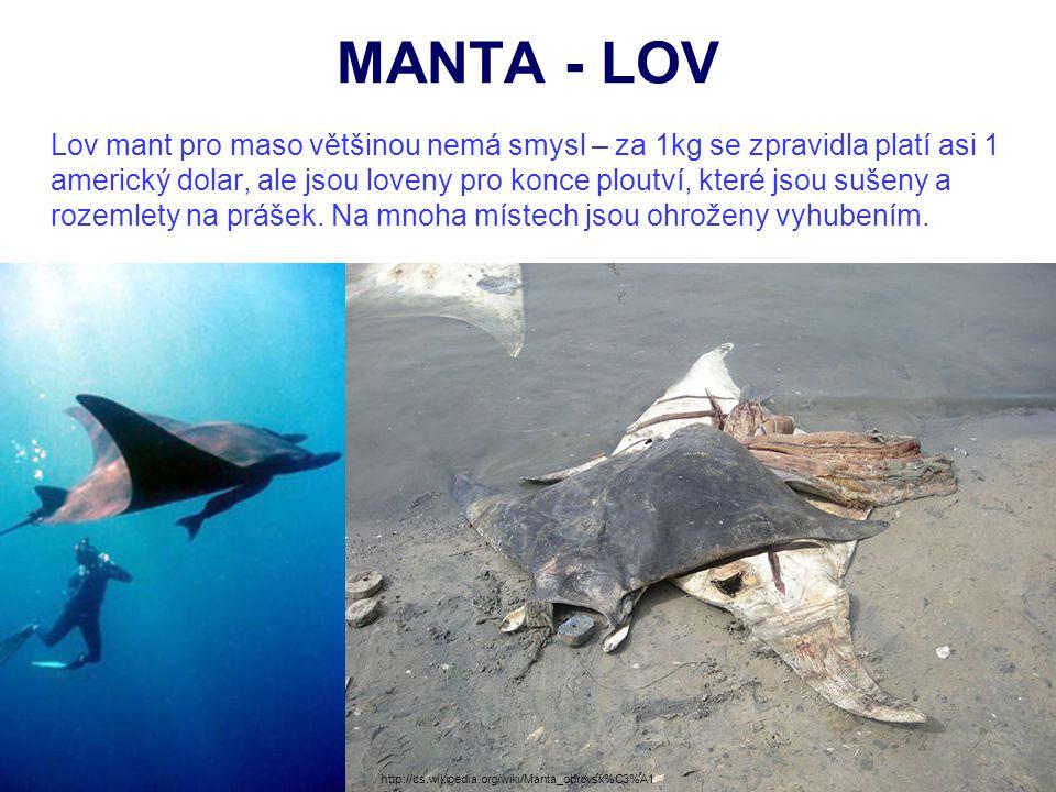 MANTA - LOV