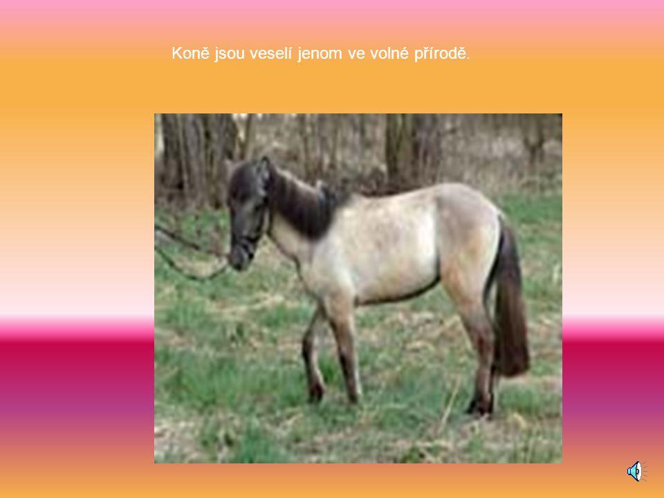 Koně jsou veselí jenom ve volné přírodě.