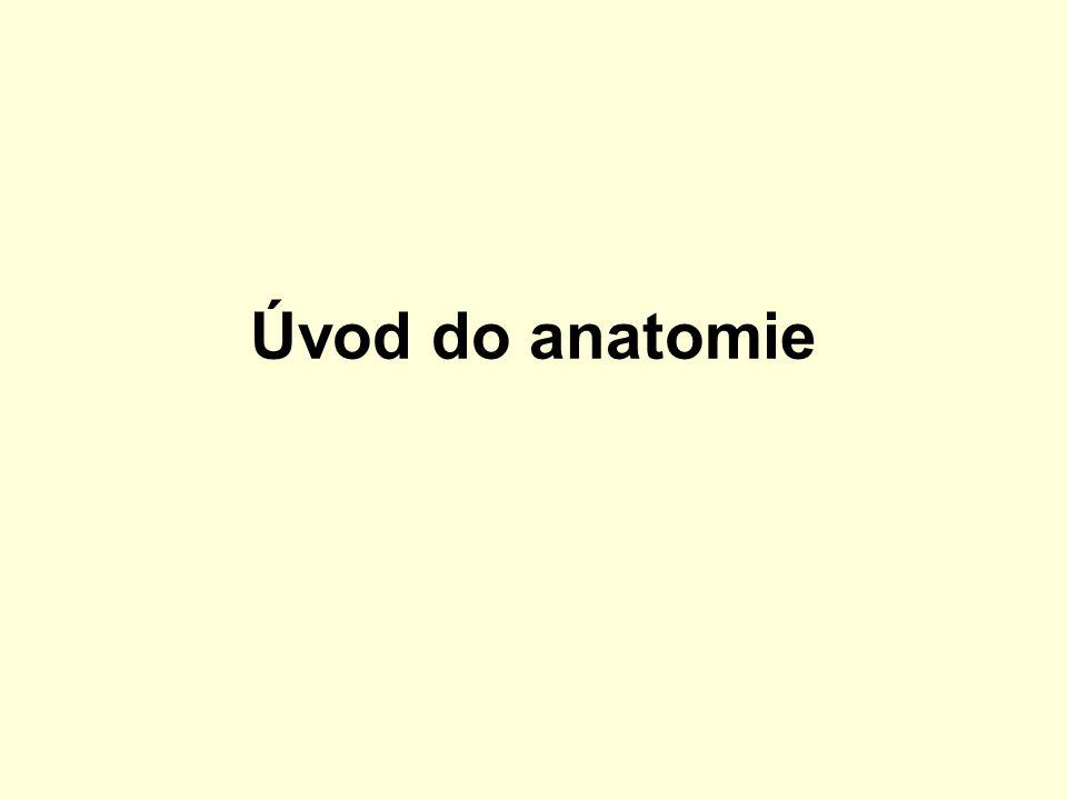 Úvod do anatomie
