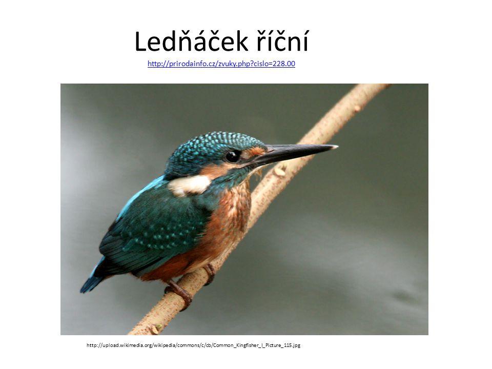 Ledňáček říční http://prirodainfo.cz/zvuky.php cislo=228.00