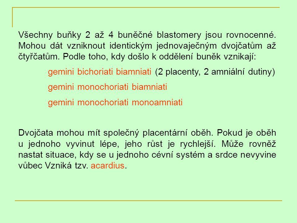 Všechny buňky 2 až 4 buněčné blastomery jsou rovnocenné