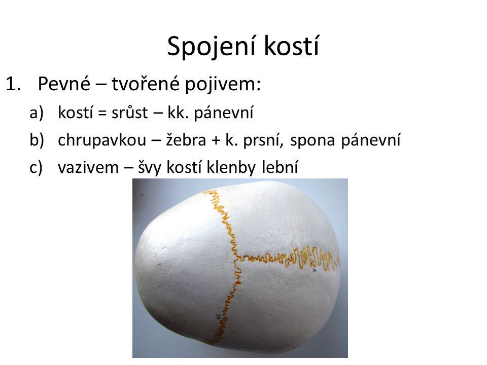 Spojení kostí Pevné – tvořené pojivem: kostí = srůst – kk. pánevní