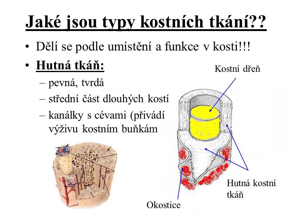 Jaké jsou typy kostních tkání