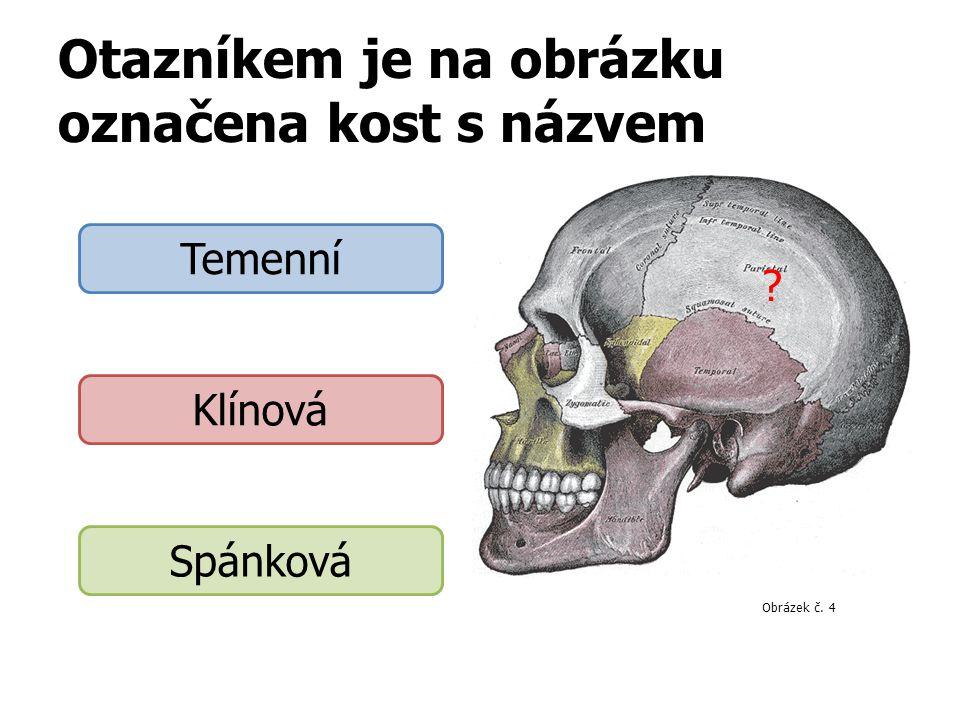 Otazníkem je na obrázku označena kost s názvem