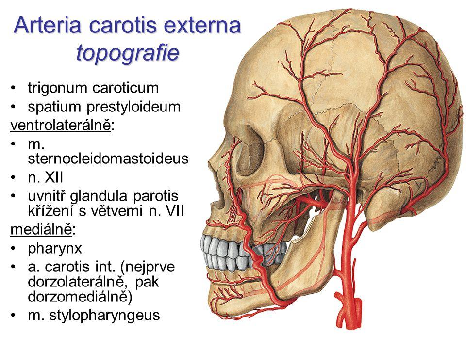 Wunderbar Anatomie Der A. Carotis Externa Zeitgenössisch ...