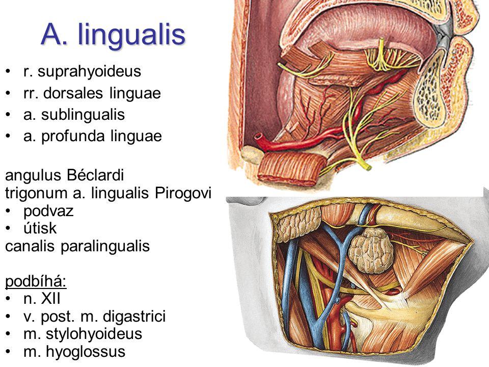 A. lingualis r. suprahyoideus rr. dorsales linguae a. sublingualis