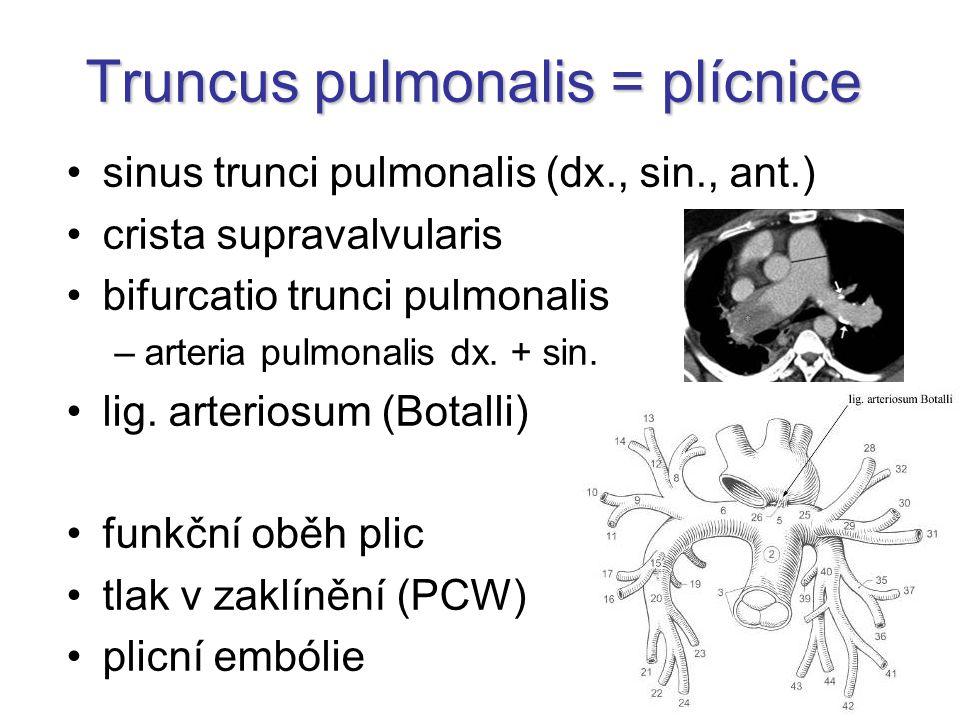 Truncus pulmonalis = plícnice