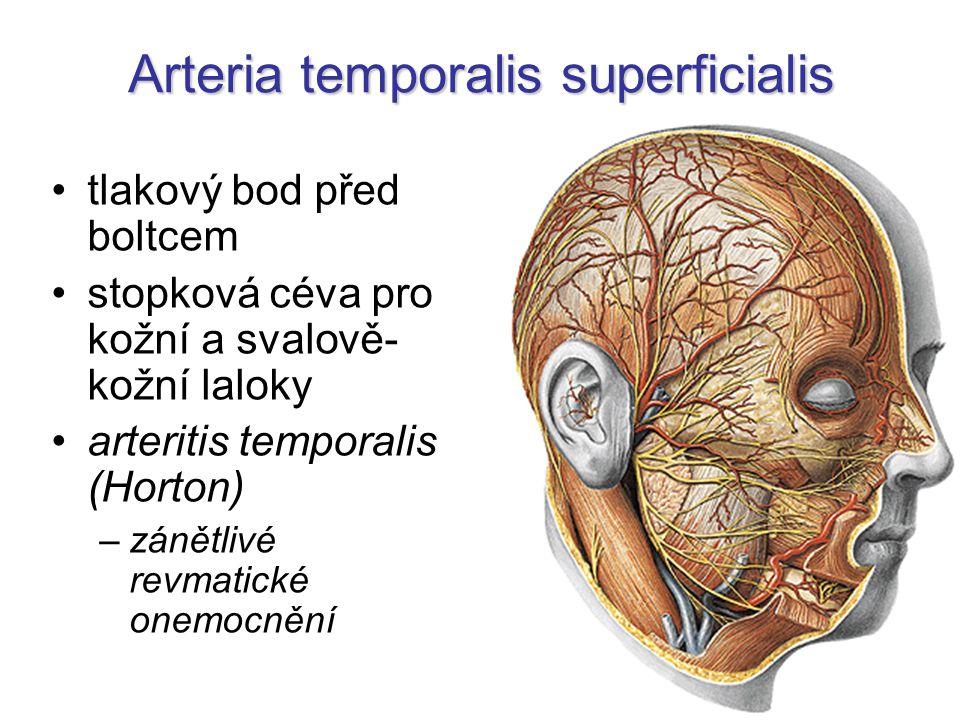 Arteria temporalis superficialis