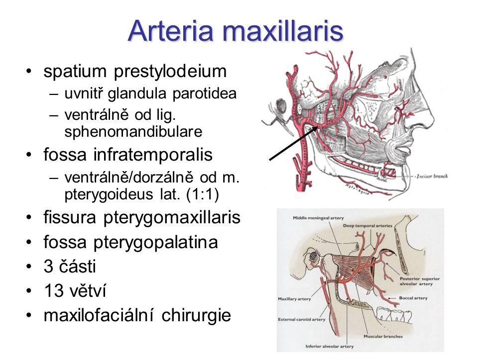 Arteria maxillaris spatium prestylodeium fossa infratemporalis