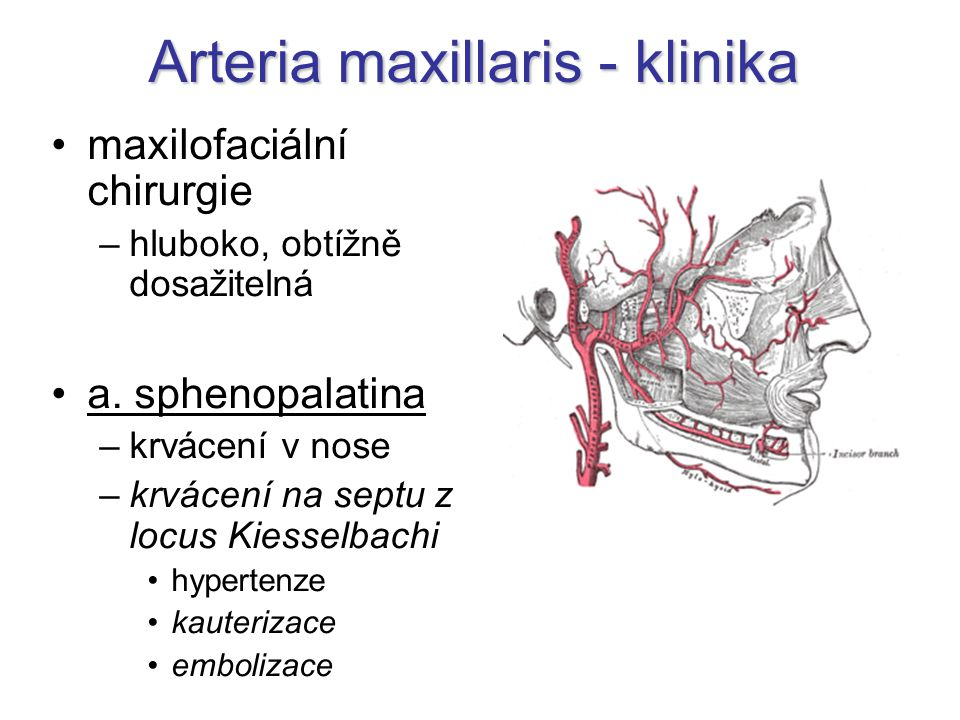 Arteria maxillaris - klinika