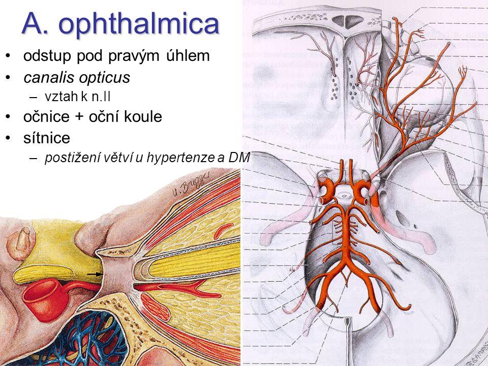 A. ophthalmica odstup pod pravým úhlem canalis opticus