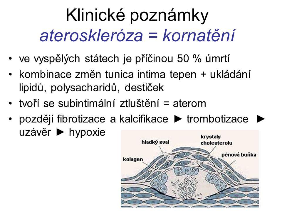 Klinické poznámky ateroskleróza = kornatění