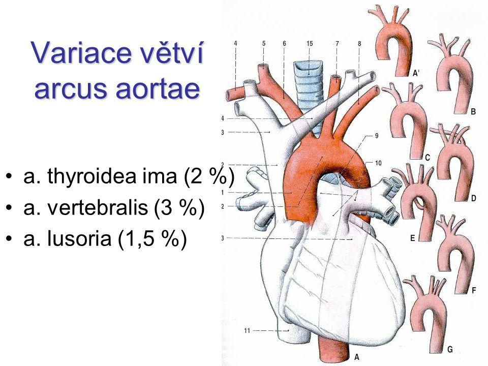 Variace větví arcus aortae