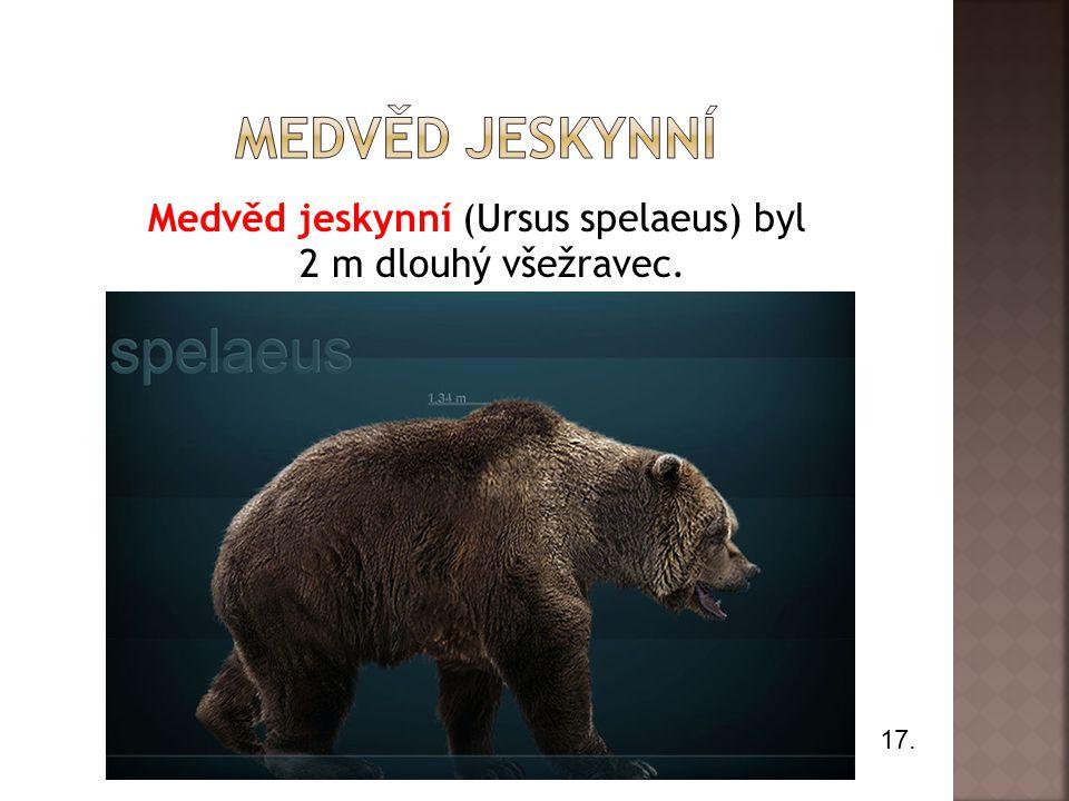 Medvěd jeskynní (Ursus spelaeus) byl 2 m dlouhý všežravec.