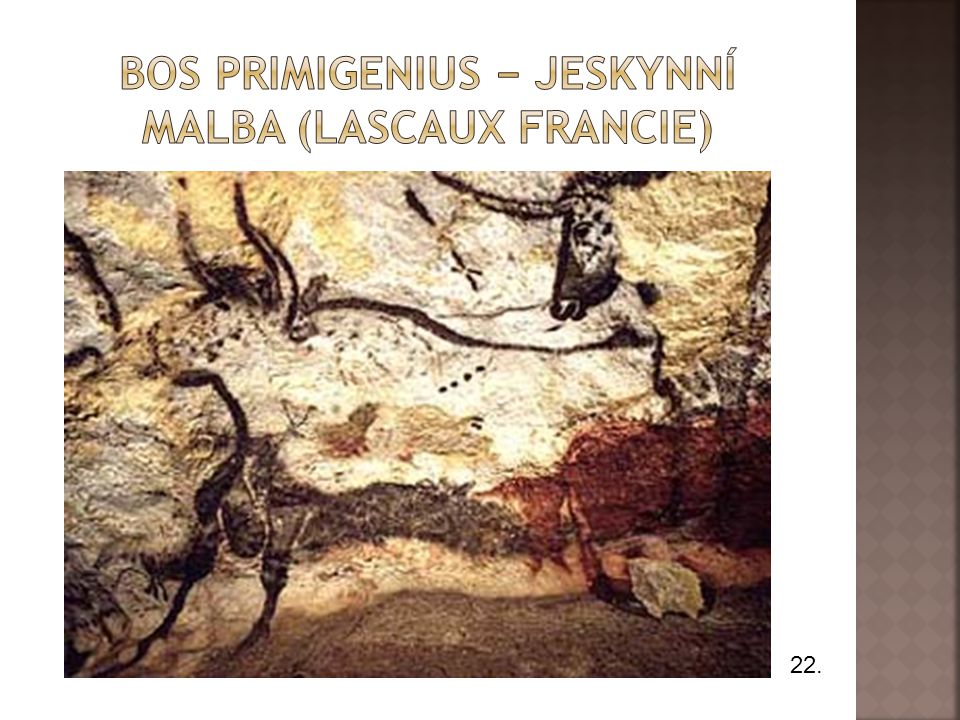 Bos primigenius − jeskynní malba (lascaux francie)