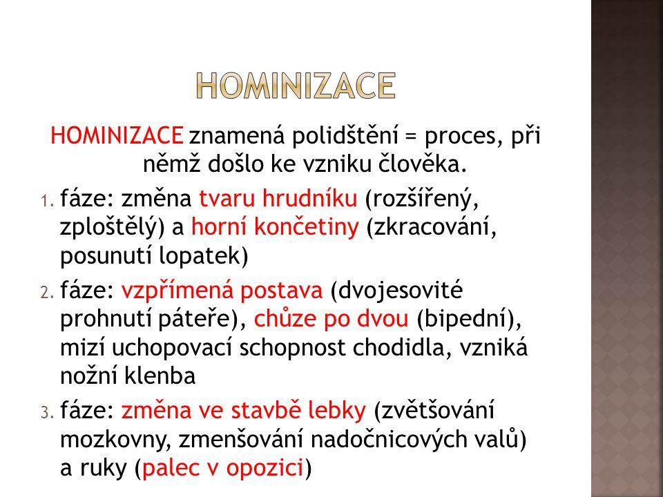 hominizace HOMINIZACE znamená polidštění = proces, při němž došlo ke vzniku člověka.