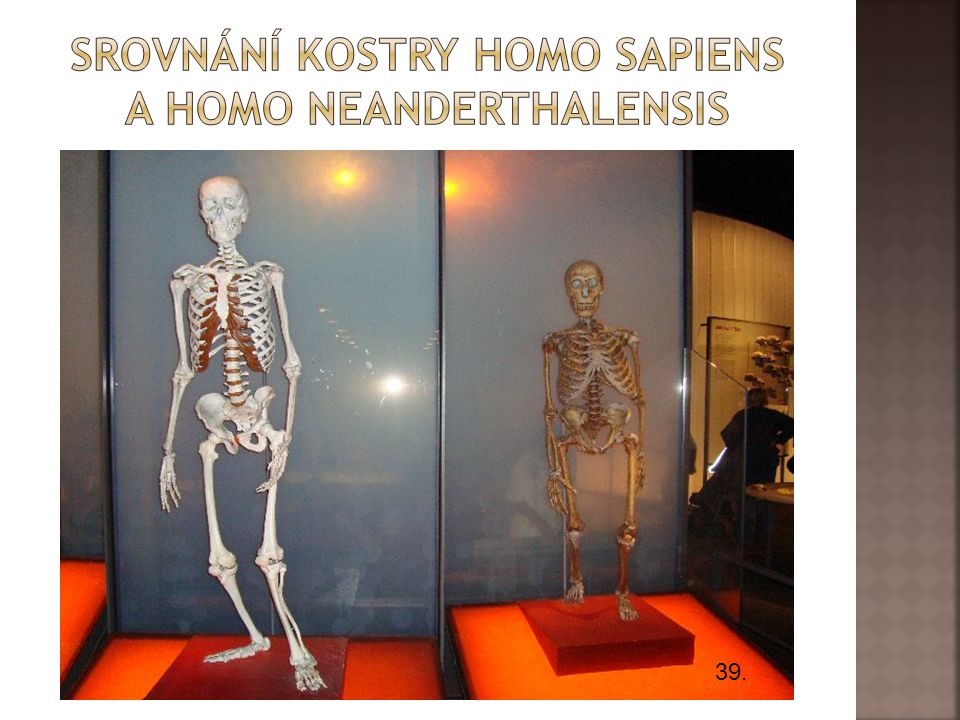 Srovnání kostry homo sapiens a Homo neanderthalensis