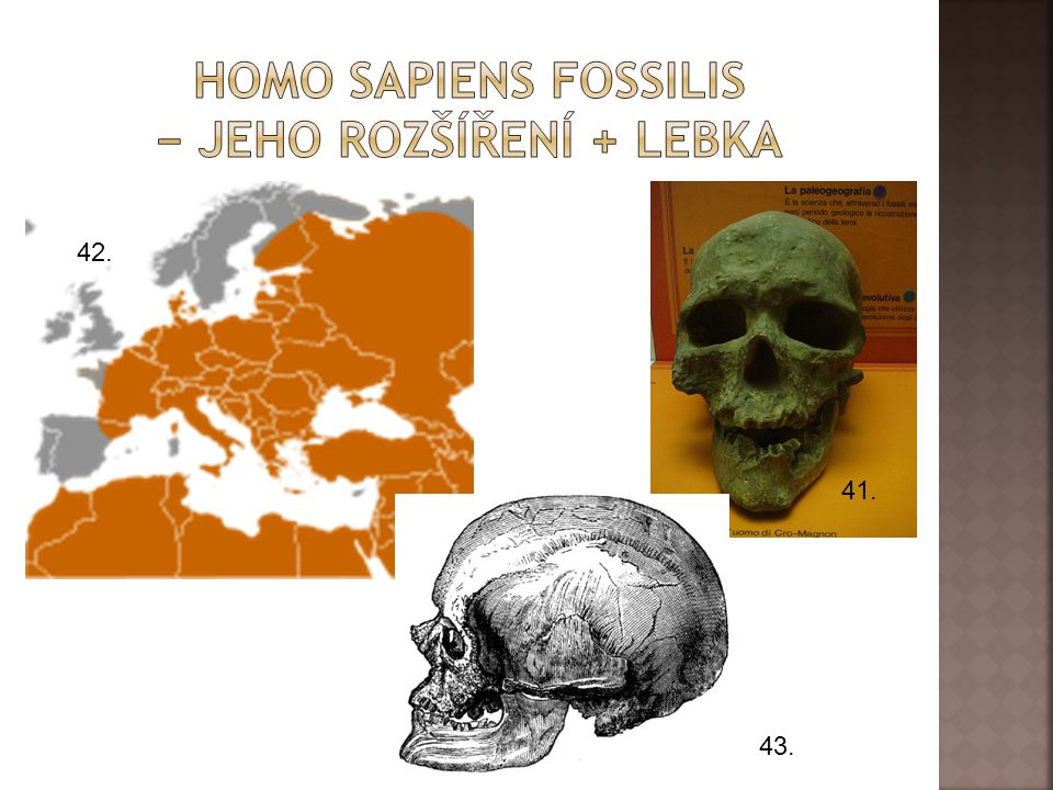 Homo sapiens fossilis − jeho rozšíření + lebka