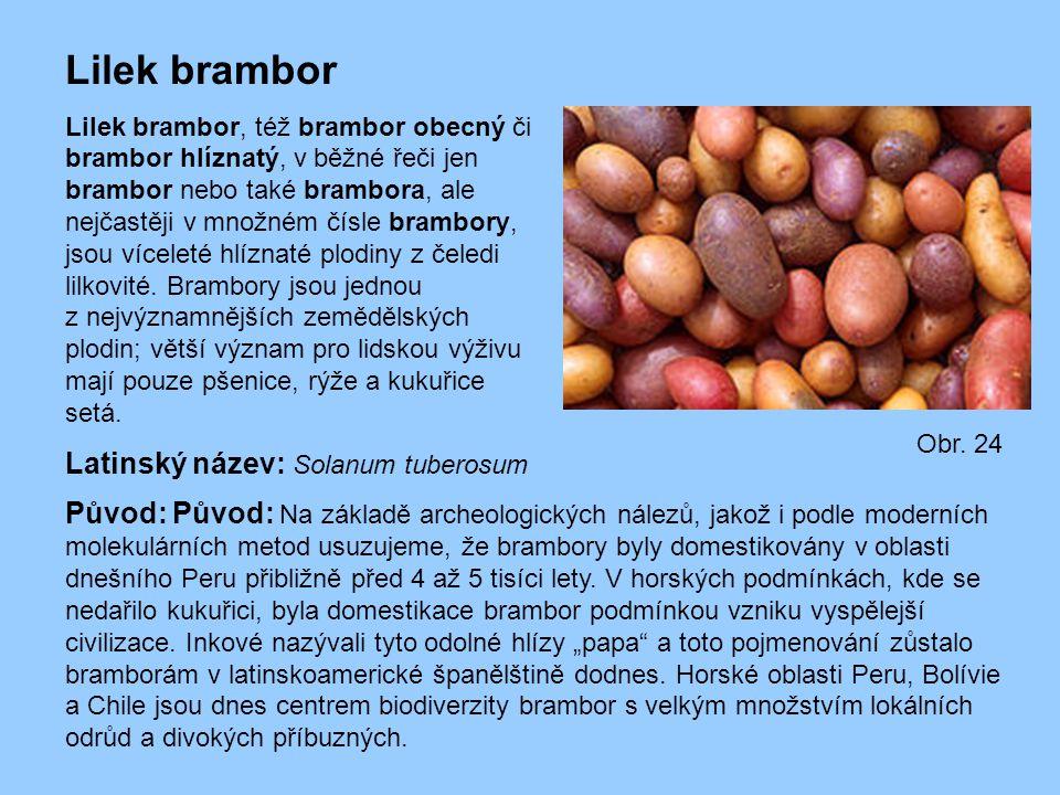 Lilek brambor Latinský název: Solanum tuberosum