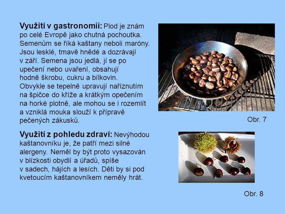 Využití v gastronomii: Plod je znám po celé Evropě jako chutná pochoutka. Semenům se říká kaštany neboli maróny. Jsou lesklé, tmavě hnědé a dozrávají v září. Semena jsou jedlá, jí se po upečení nebo uvaření, obsahují hodně škrobu, cukru a bílkovin.