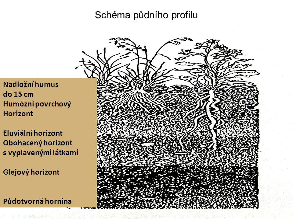 Schéma půdního profilu