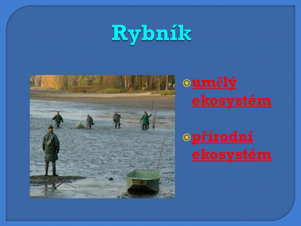 Rybník umělý ekosystém přírodní ekosystém