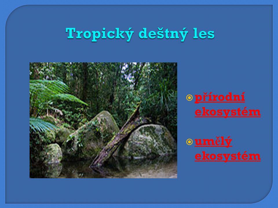 Tropický deštný les přírodní ekosystém umělý ekosystém