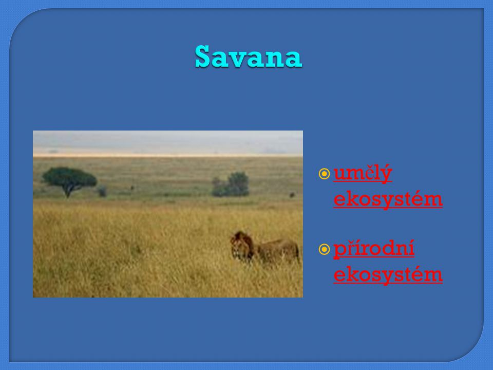 Savana umělý ekosystém přírodní ekosystém