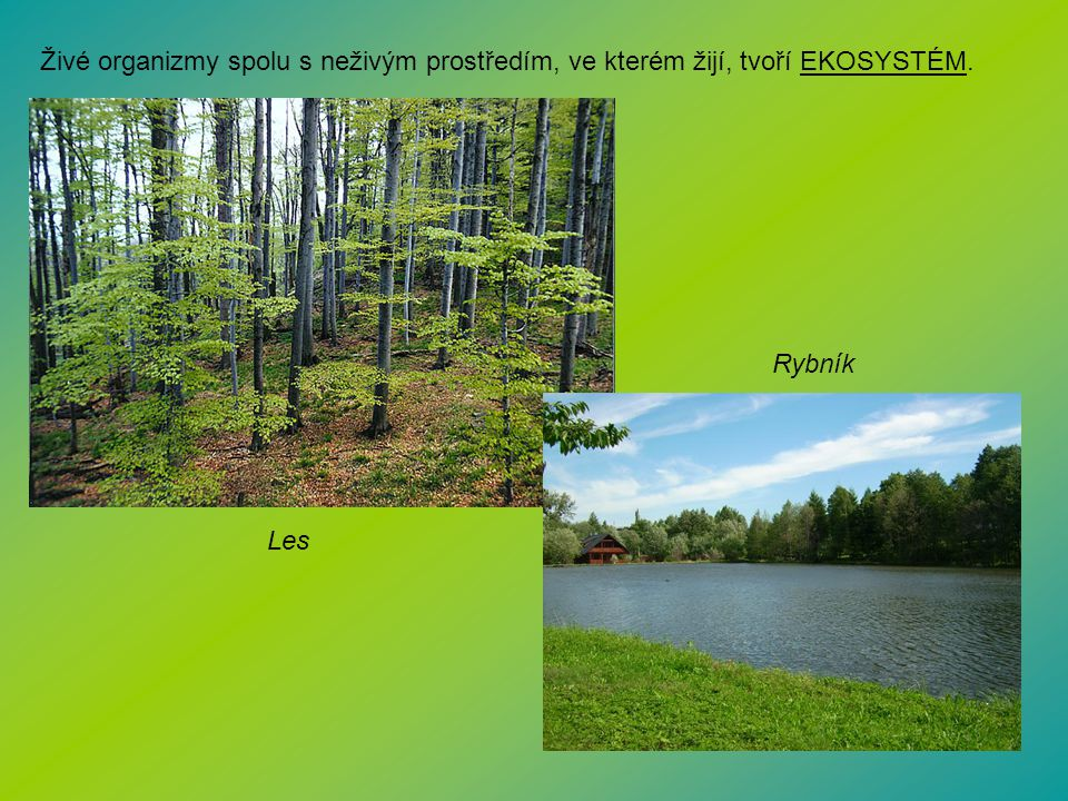 Živé organizmy spolu s neživým prostředím, ve kterém žijí, tvoří EKOSYSTÉM.