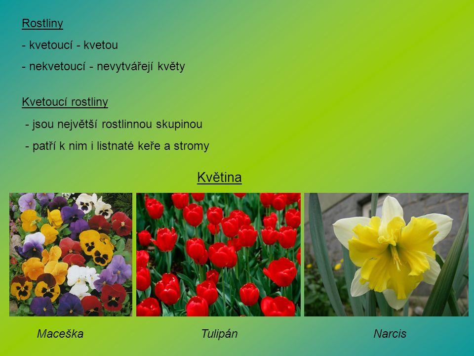 Květina Rostliny kvetoucí - kvetou nekvetoucí - nevytvářejí květy